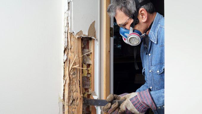 Termite Exterminator Working