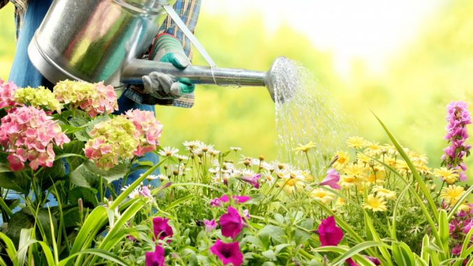 gardener watering the plants and flowers in the garden